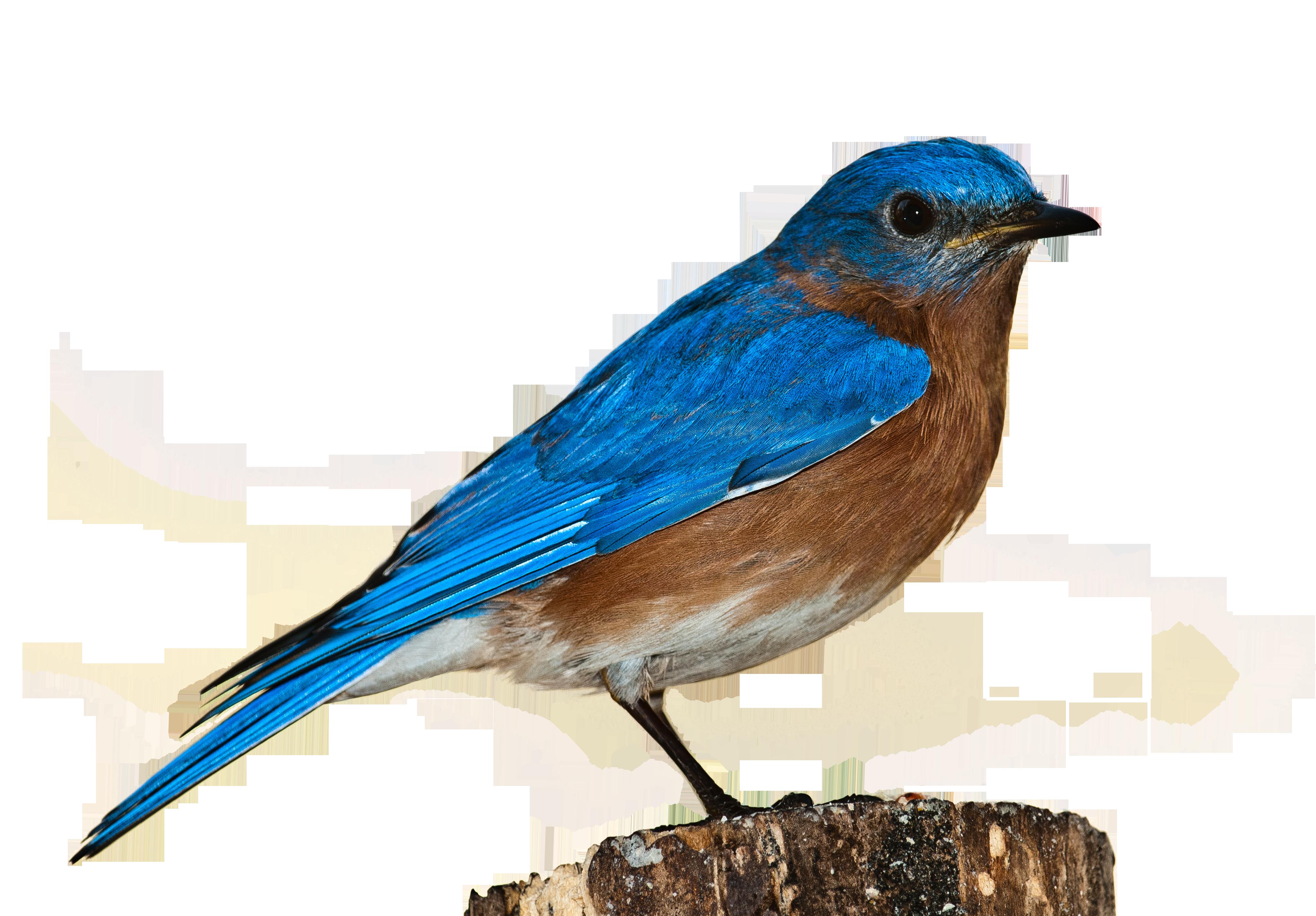bird-1232416